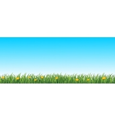 Green grass seamless background vector image