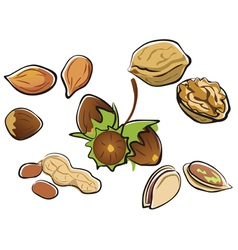 Nuts collection in cartoon style isolated vector
