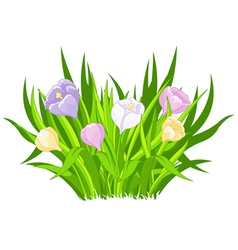 Crocus bouquet vector