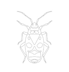Pyrrhocoris apterus beetle bug-soldier sketch vector
