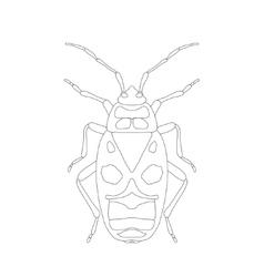 Pyrrhocoris apterus beetle Bug-soldier Sketch vector image vector image