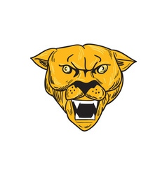 Angry cougar mountain lion head drawing vector