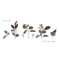 Seeded eucalyptus tree vintage branch elements set vector