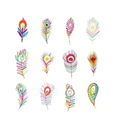 Peacock feather collection for your design vector image