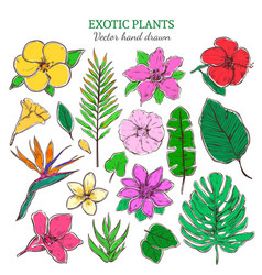 Colored exotic and tropical plants set vector