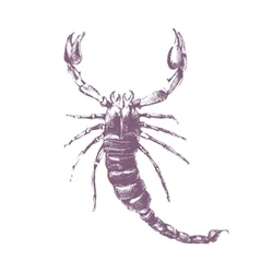 Scorpion on white background vector