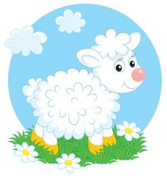 Lamb vector