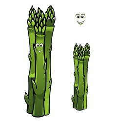 Bunch of fresh green asparagus spears vector