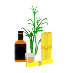 Rum bottle sugar cane glass shot flat style vector