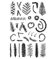 Hand drawn set fir fine branch vector