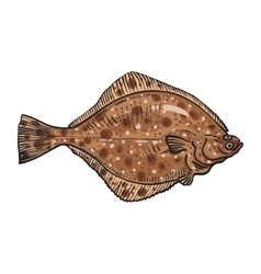 Hand drawn flounder sketch style vector image vector image