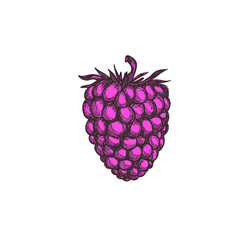 juicy blueberry hand drawn isolated icon vector image