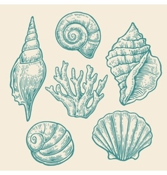 Sea shell set color engraving vintage vector