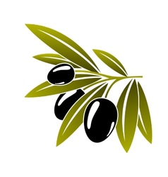Leafy green twig with ripe black olives vector