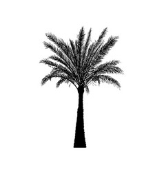 Sketch palm tree hand drawn silhouette date palm vector