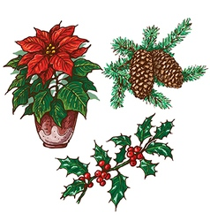 Chrirtmas plants vector