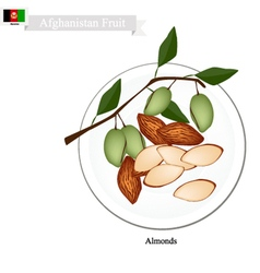 Almonds one of the most popular fruit inafghanist vector
