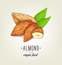 colourful almond icon isolated on background vector image