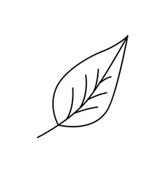 modern thin line icon of leaf premium quality vector image vector image