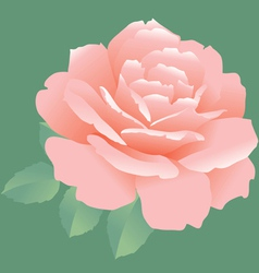 simple rose vector image vector image