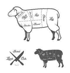 British cuts of lamb or mutton diagram vector image