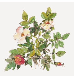 Dog rose vector