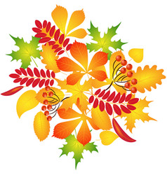 composition of autumn leaves vector image vector image