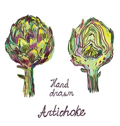 Artichoke hand drawn card set artistic design vector image vector image