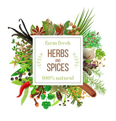 Big set culinary herbs and spices under squire vector