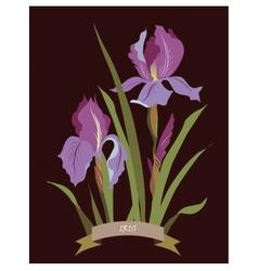 Iris flowers bouquet vector image