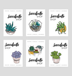 succulents shop advertising cards collection vector image