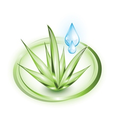 Aloe vera plant with water droplets vector