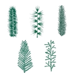 Hand drawn set green fir branch pine vector