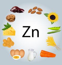 Food rich in zinc healthy eating vector