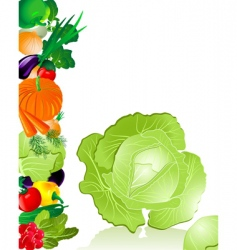 Vegetables cabbage vector