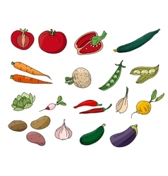 Different vegetables isolated on white vector image