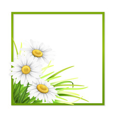 Green frame with grass and daisies in corner vector