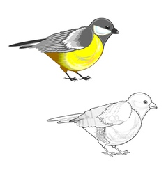 A titmouse isolated on a white background vector image vector image