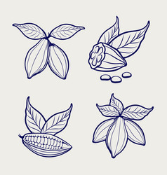 Sketch of cocoa beans and leaves vector