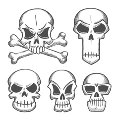 Skulls and craniums with crossbones icons vector