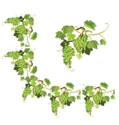 Set of grapes frame vignette and repeated element vector