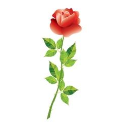 design floral element vector image