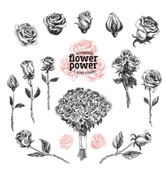 Roses set Flower in sketch vector image