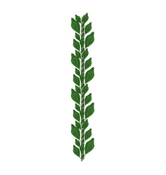 Bouquet of leaves vector