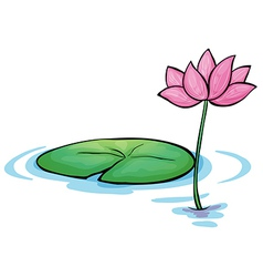 A waterlily flower vector