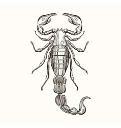 Hand drawn engraving sketch of scorpion for tattoo vector