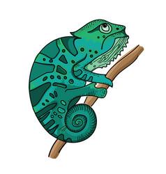 turquoise chameleon on branch white background vector image