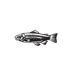 Sea trout spotted vector