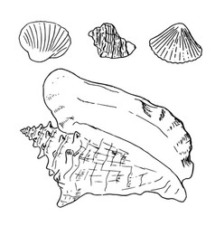 Set of various beautiful mollusk sea shells vector
