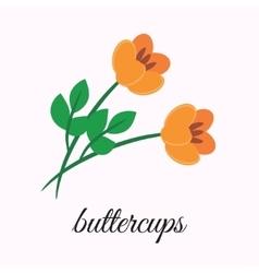 Buttercups vector